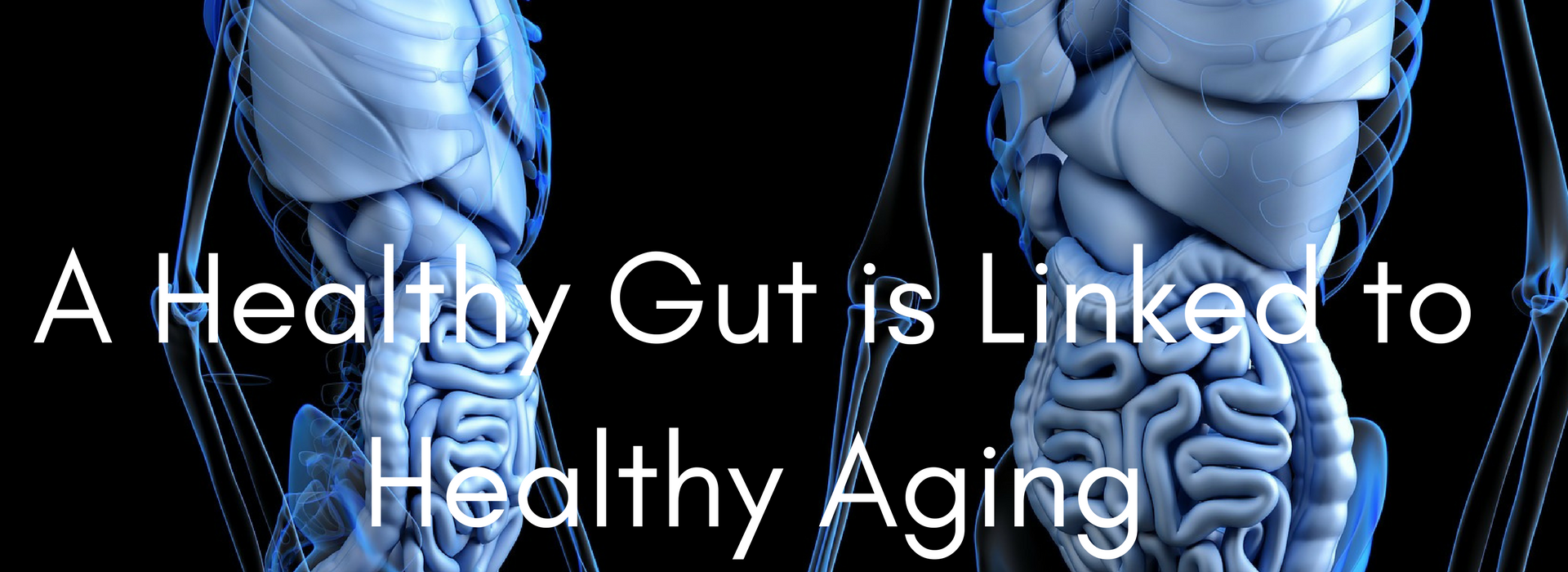healthy gut and healthy aging
