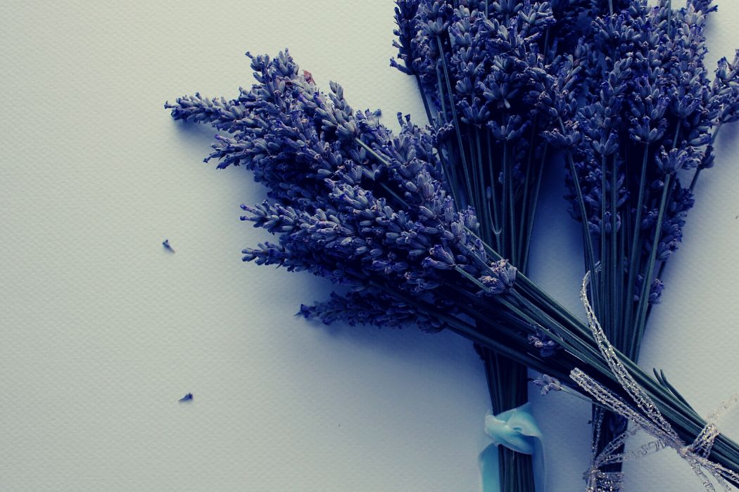 5 Calming Herbs To Help With Insomnia and Sleep